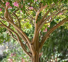 Pink Crape Myrtle by randymir