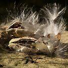 Seeds on Stone by Lynn Gedeon