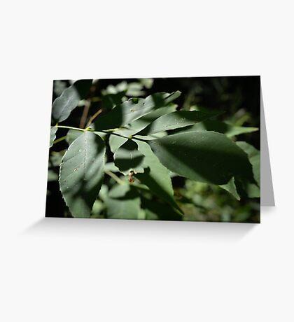 Shadow Leaf Greeting Card