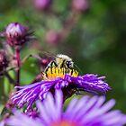 Bee 16 by Mark Bangert