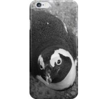 African penguin what a cutie iPhone Case/Skin