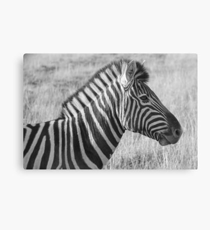 zebra portrait (black & white) Canvas Print