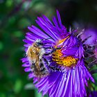 Bee 17 by Mark Bangert