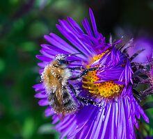 Bee 17 by Mark Bangert