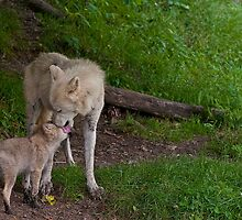 Arctic Wolf And Pup by WolvesOnly
