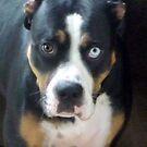 Thurston the Wonder Dog by Sheri Nye