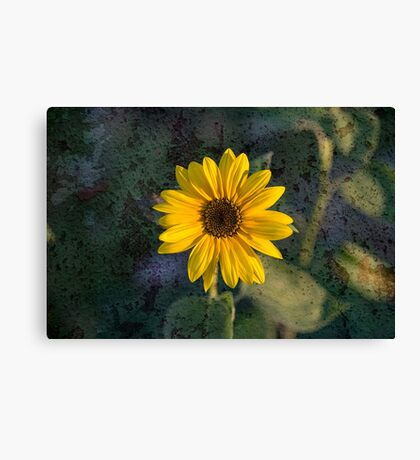 Sunflower texture Canvas Print