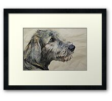 Irish Wolfhound Puppy Framed Print