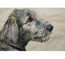 Irish Wolfhound Puppy Photographic Print