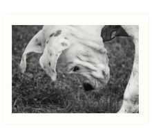 Puppy Discovers A Bug... Art Print