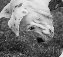 Puppy Discovers A Bug... by Laurie Minor