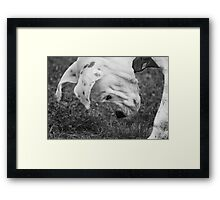 Puppy Discovers A Bug... Framed Print