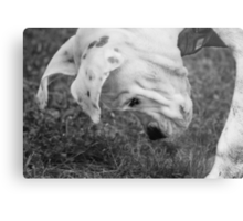 Puppy Discovers A Bug... Metal Print