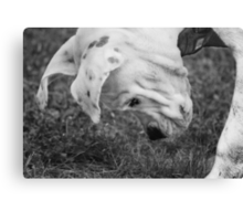 Puppy Discovers A Bug... Canvas Print