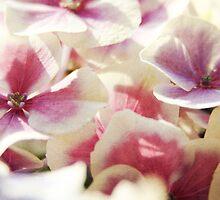 Hydrangea Dream #2 by MaureenAstrid