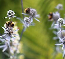 Bees Everywhere by MimHarper