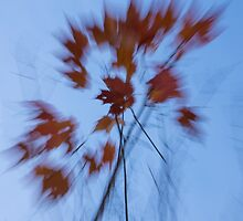Abstract Impressions of Fall - the Song of the Wind  by Georgia Mizuleva