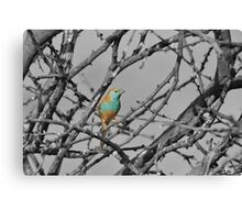 Blue Waxbill - Selective Beauty from Nature Canvas Print