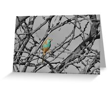 Blue Waxbill - Selective Beauty from Nature Greeting Card