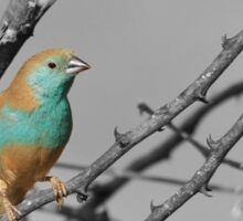 Blue Waxbill - Selective Beauty from Nature Sticker