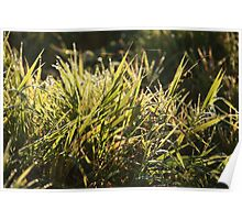 dew drops in lights on green grass Poster