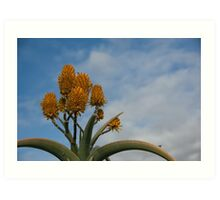Orange Cactus Art Print