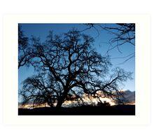 Evening Oak Art Print