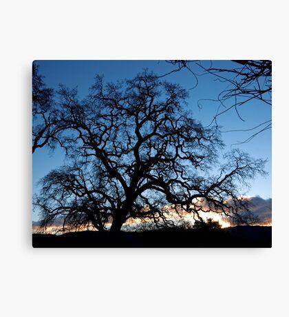 Evening Oak Canvas Print