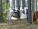 Hard Working Horses by FrankieCat