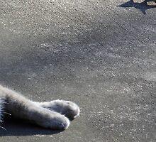 Kitty Paws by WildestArt