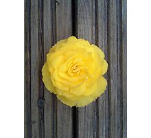 Yellow Flower on the Deck Photographic Print