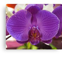 Orchid, Changi Airport, Singapore Canvas Print