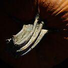 Shadows On The Pumpkin by WildestArt