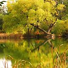 On Sinton Pond (5)...Colorado Springs by dfrahm