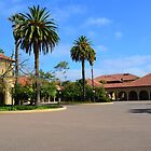Stanford University campus picture by naturematters