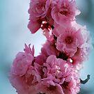 Cluster of Spring Blossum By Lorraine McCarthy by Lozzar Flowers & Art