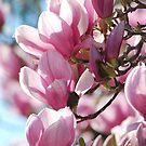 Spring Bounty By Lorraine McCarthy by Lozzar Flowers & Art