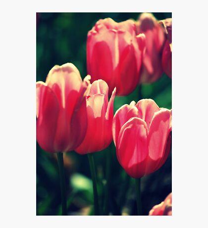 Volumptuous Tulips By Lorraine McCarthy Photographic Print