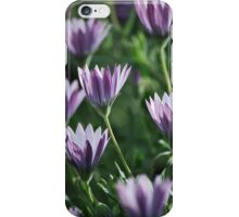 A Daisy or Two by Lorraine McCarthy iPhone Case/Skin