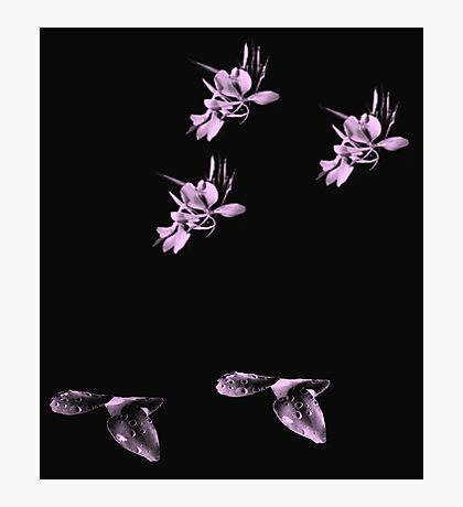 Pink Pastel Petals Photographic Print