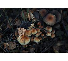 Ginger mushrooms Photographic Print