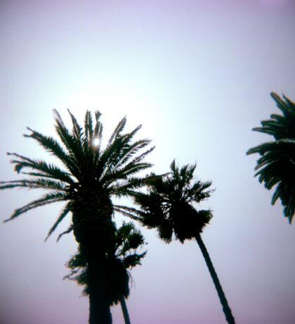 Holga Palms Sticker
