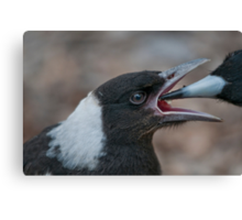 Baby Magpie 2 Canvas Print