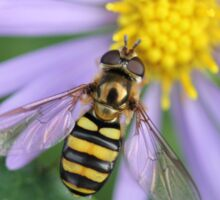 Hover Fly Sticker
