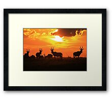 Red Hartebeest - Freedom is Golden - African Wildlife Framed Print