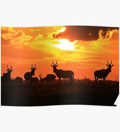 Red Hartebeest - Freedom is Golden - African Wildlife Poster