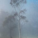 Lone tree in the Mist by Pauline Tims