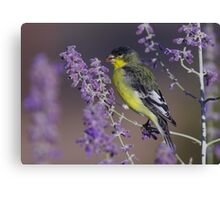 Goldfinch at Palomino Valley Canvas Print