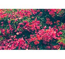 Pink Floral Photographic Print