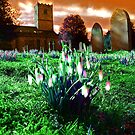 Snowdrop Lamps. Kirkby Lonsdale, Cumbria, England. by David Dutton